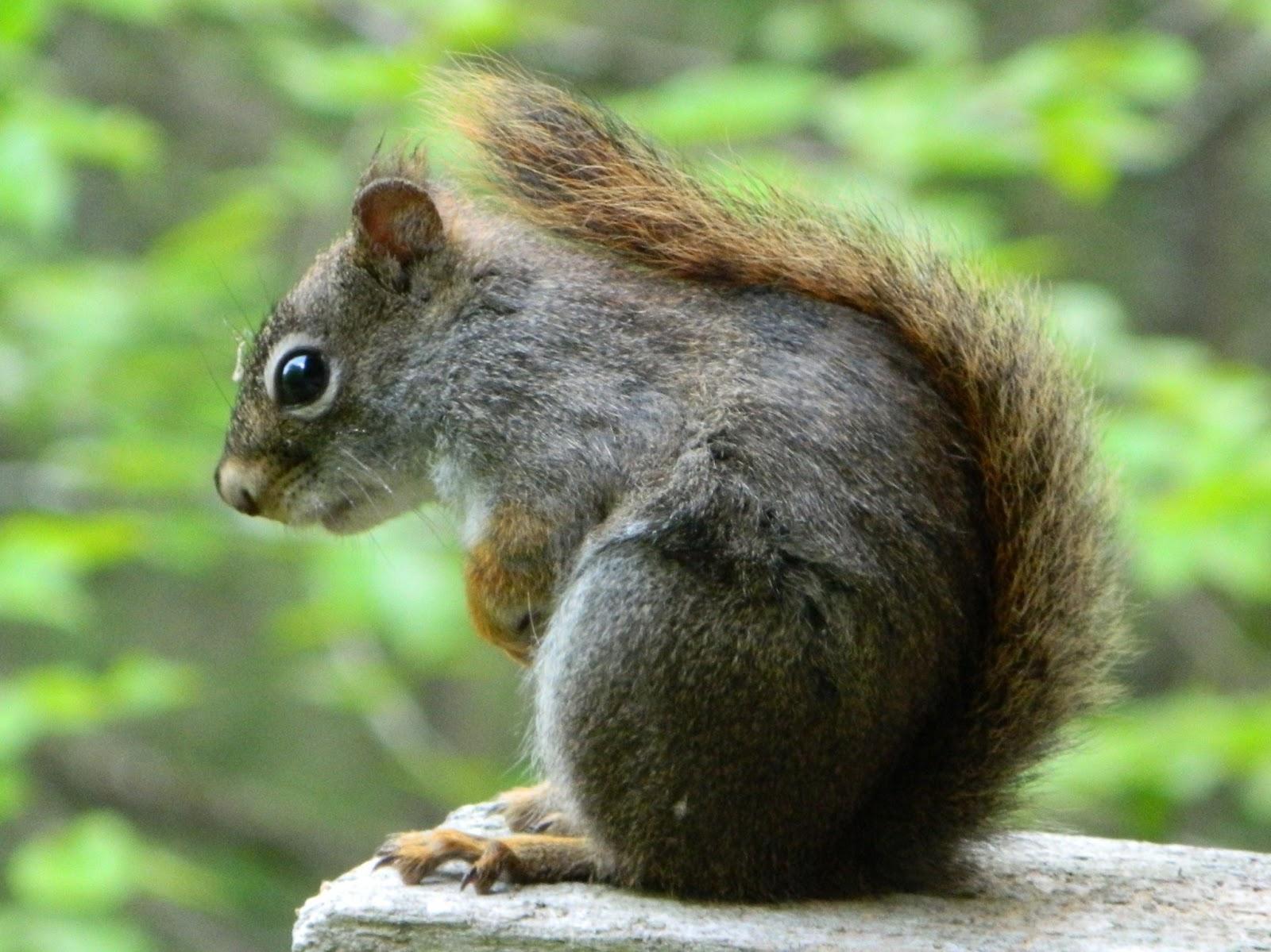 Cute squirrels in love - photo#9