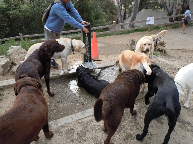 Labrador watering hole