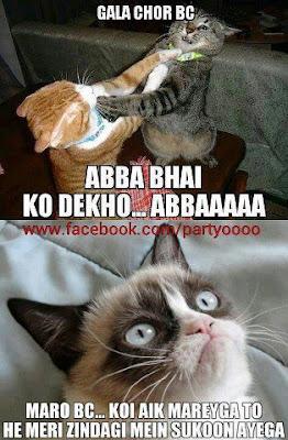 manhoos bc wali billi   cat fight fun aur fun