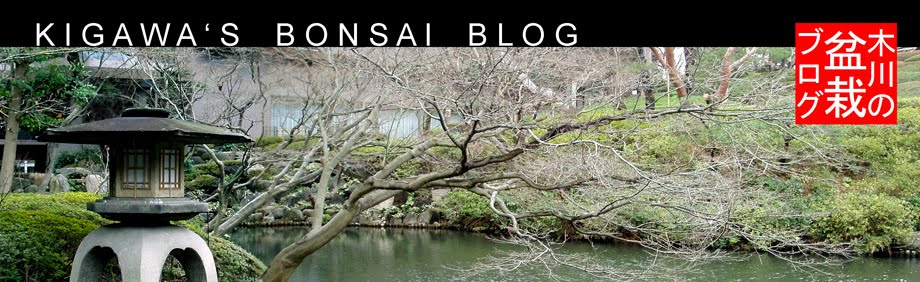 Kigawa's Bonsai Blog