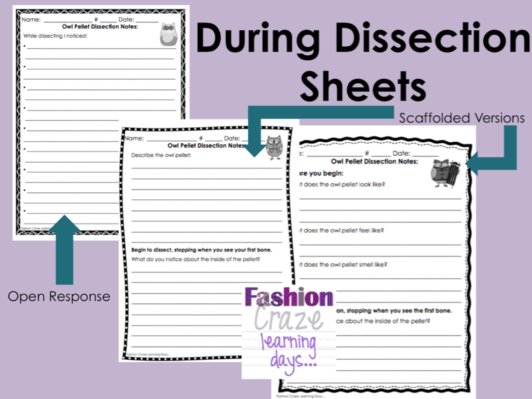 owl pellet dissection worksheet pdf