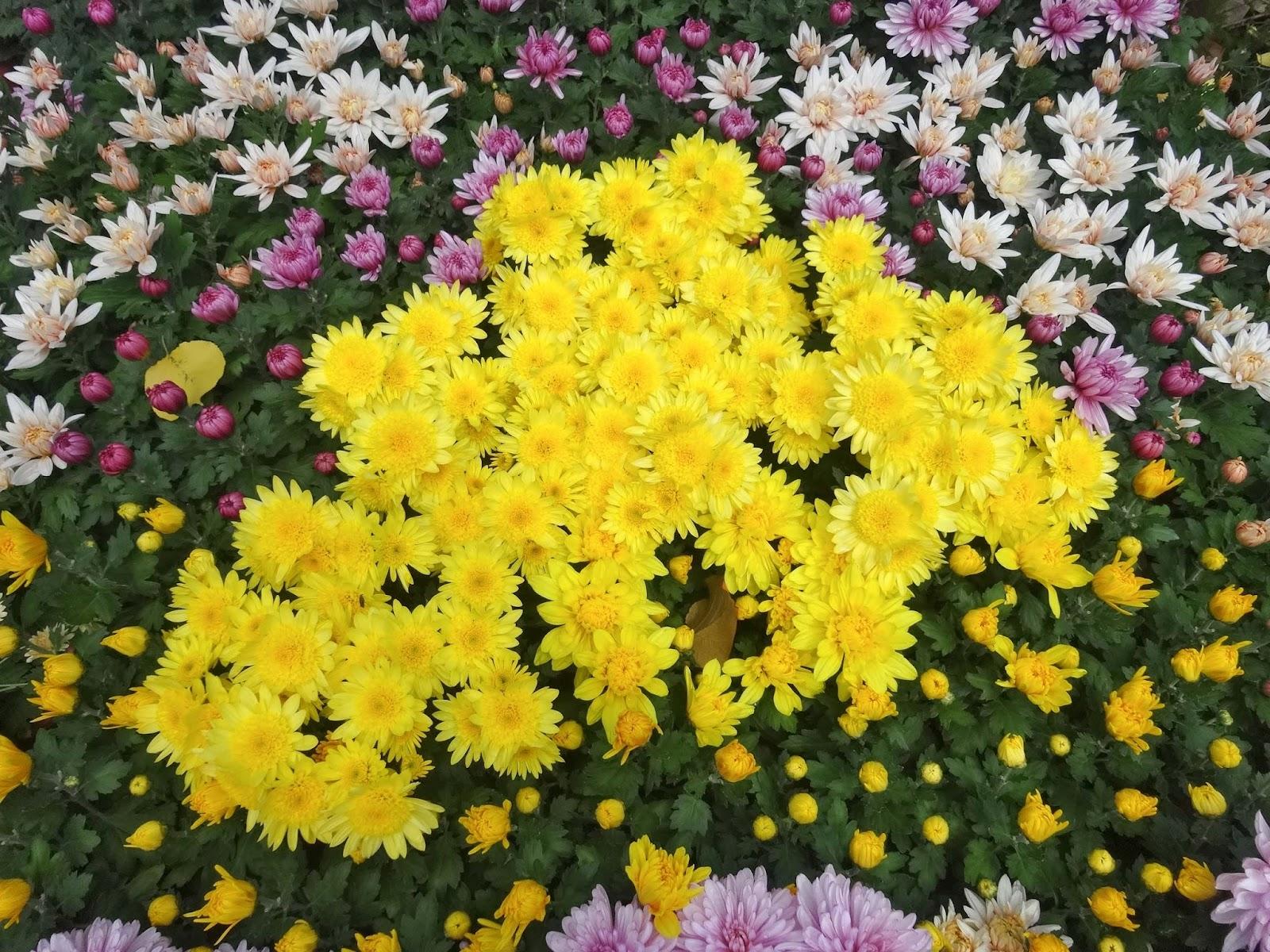 菊,花,弘前城菊と紅葉まつり〈著作権フリー画像〉Free Stock Photos