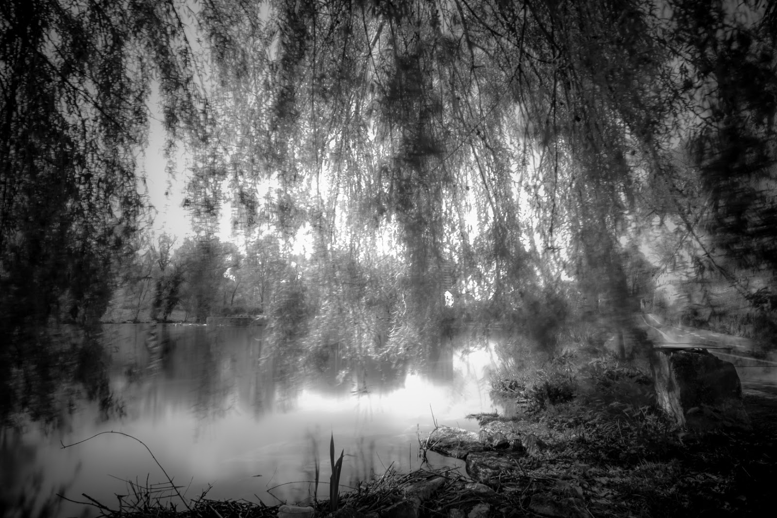 Matthew G. Beall Motion vision driven black and white fine art photography  Caught Danube River and Trees  2012/2014  Germany