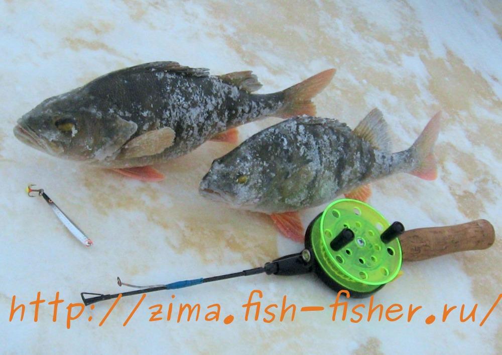 Зимняя рыбалка. Окунь на зимнюю блесну