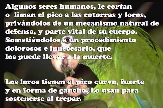 SOBRE LA NATURALEZA, FRASES SOBRE LOS ANIMALES. VIDEO SOBRE TAPADOS DE