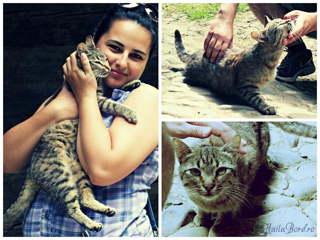 pisica muzeul satului bucovinean suceava