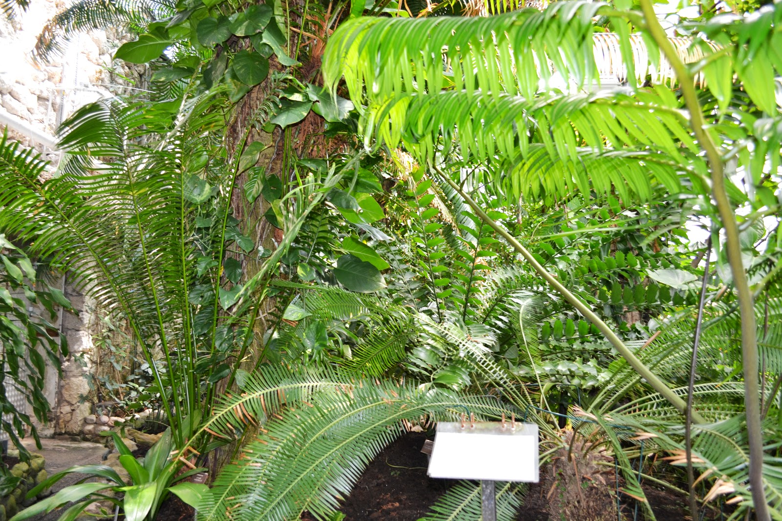 Tropical garden inside greenhouse ,botanical garden,lund