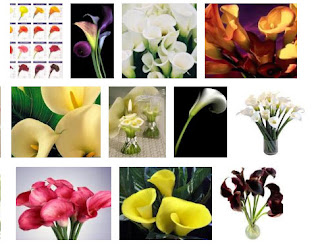 Calla Lily Flower Gallery