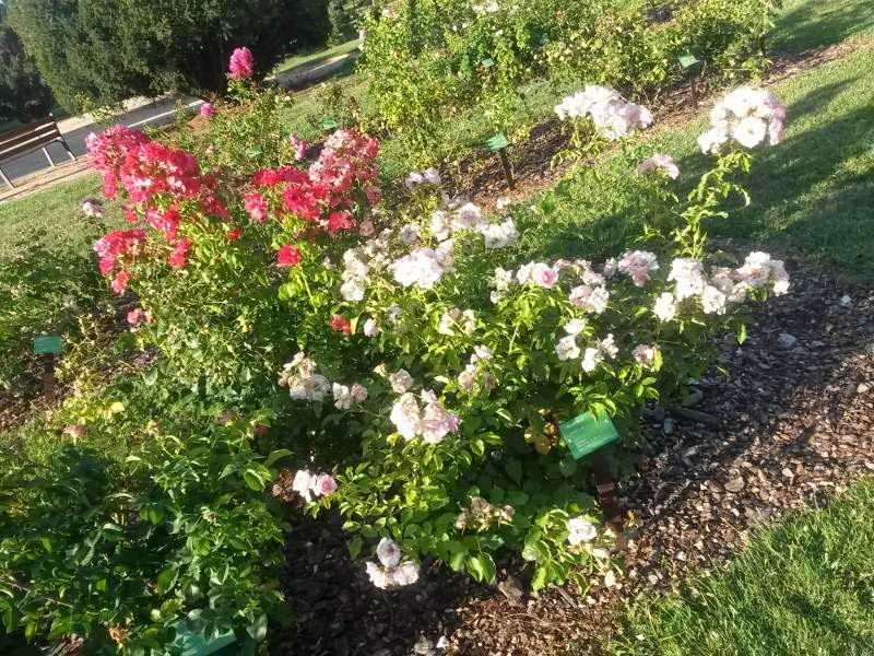 Flowers in Cervantes Park