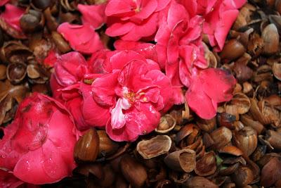 Camellia japonic petals