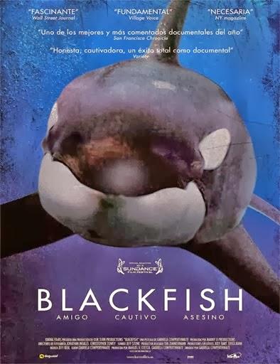 Ver Blackfish (2013) Online