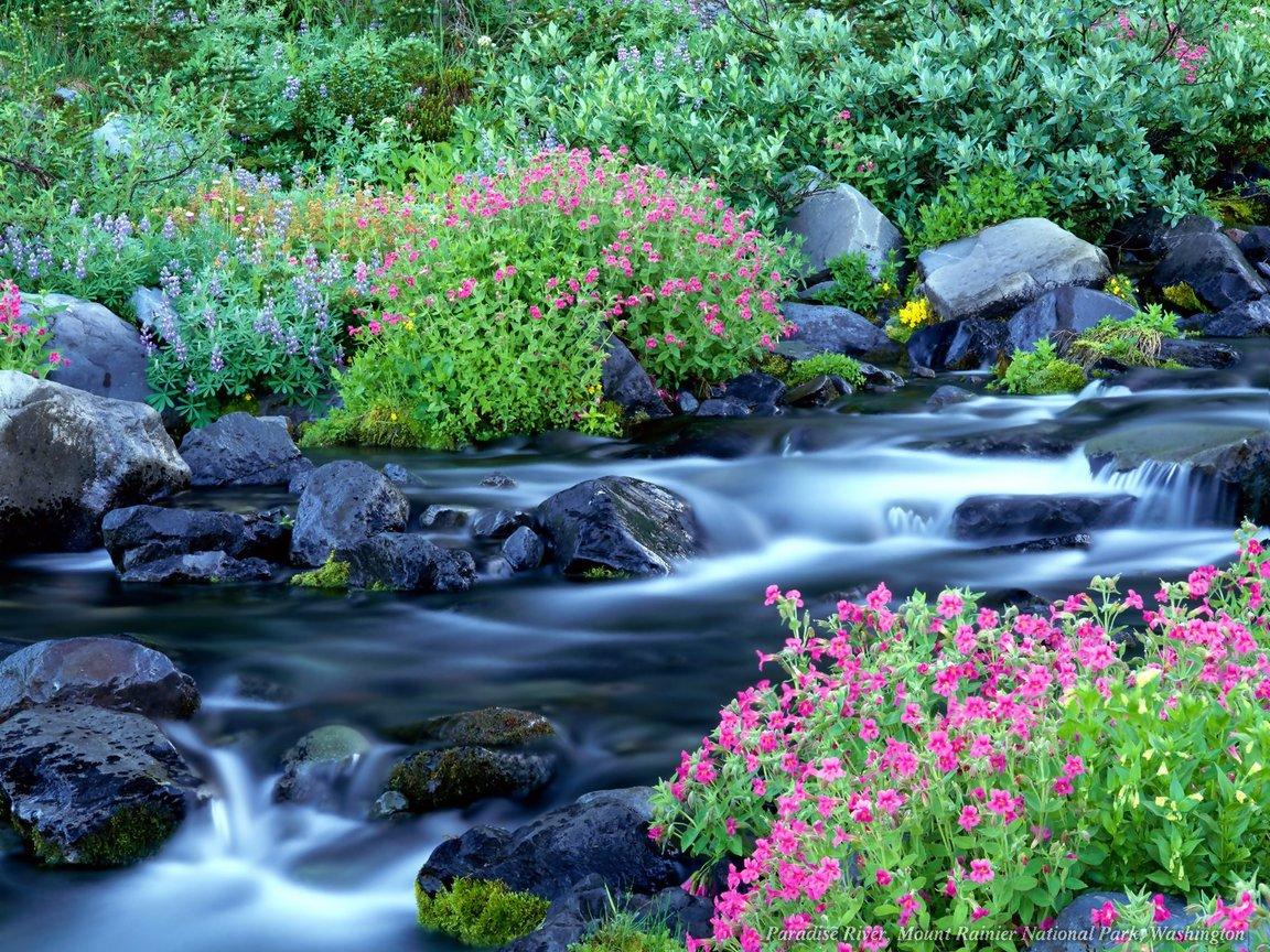 http://3.bp.blogspot.com/-xiGxj5b04Uw/Td-_SlMVAgI/AAAAAAAAAMs/MNFPBV839-Y/s1600/Nature-wallpaper-flower-in-the-rocky-river.jpg