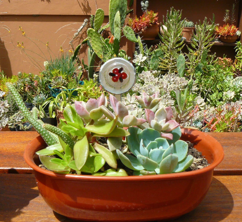 Jardines de cactus y suculentas tiffany cactus y for Cactus y suculentas
