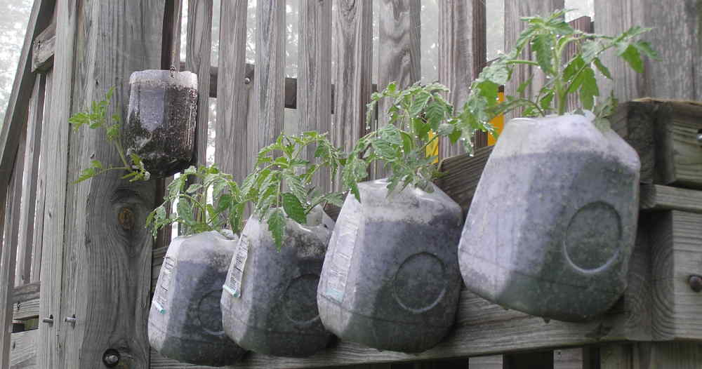Kindred spirits sisters recycle old items to create a beautiful garden - Gallon bucket garden container ...