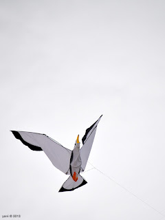 gull kite