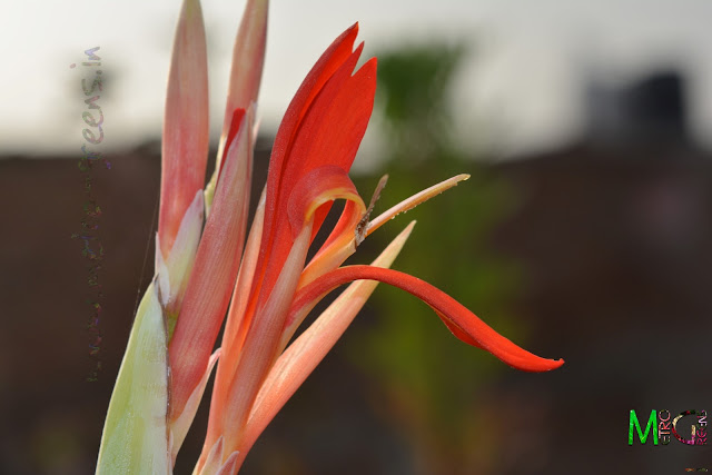 Metro Greens: Red Flower