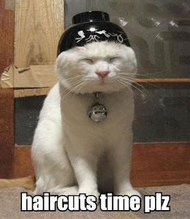 can haz haircutz?