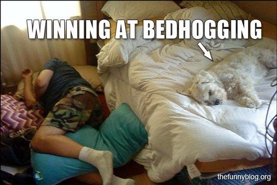 Comedy Plus Funny Dog Cute Pet Photos