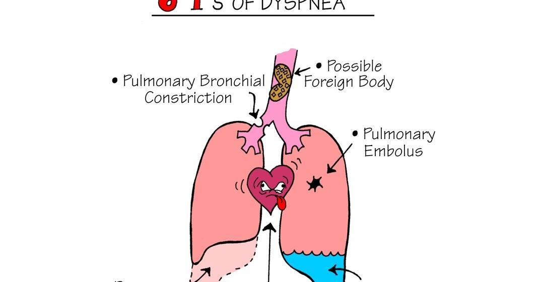 Medical mnemonics anatomy