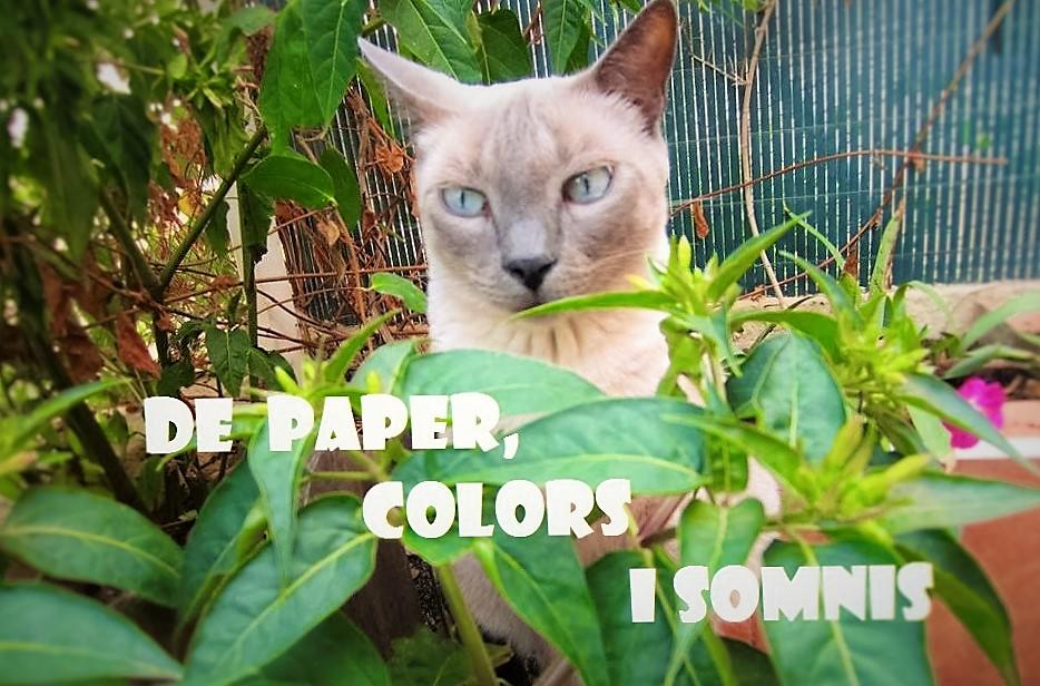 De paper,colors i somnis
