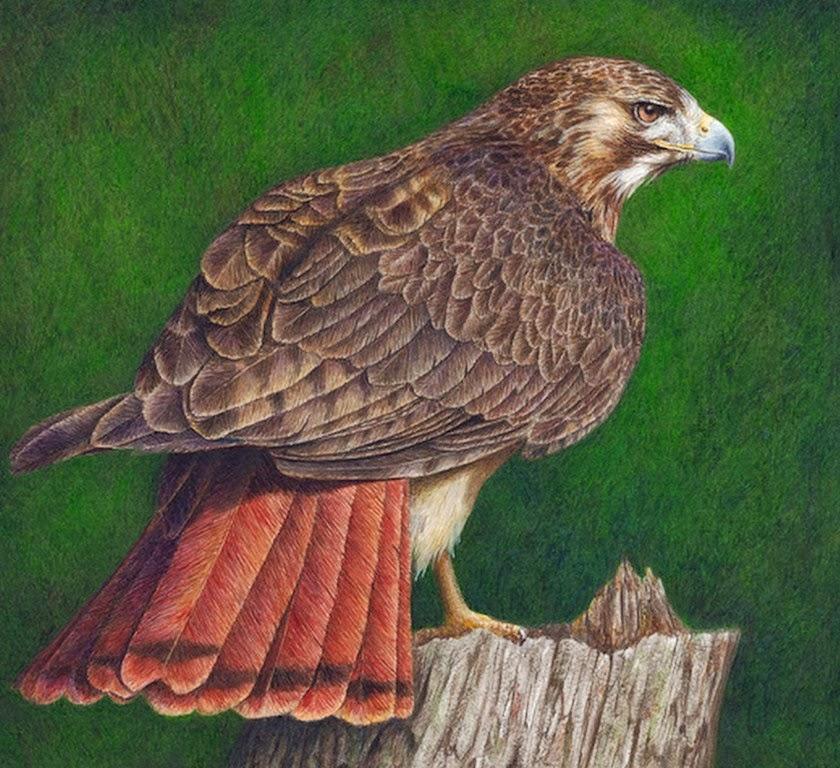 pinturas-realistas-de-aves