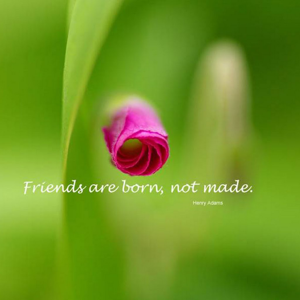 Beautiful Images Of Friendship With Quotes