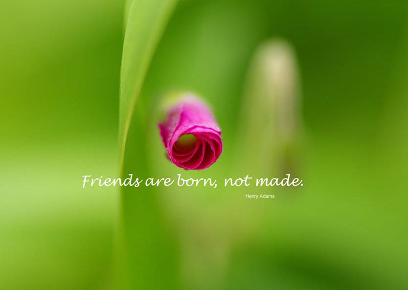 ENTERTAINMENT: BEAUTIFUL FRIENDSHIP QUOTES IN OUR LIFE Beautiful Wallpapers Of Friendship For Facebook