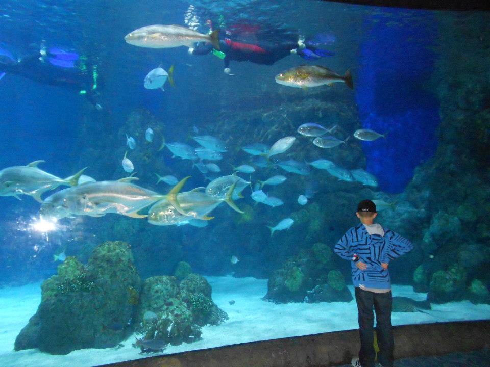 The Smiths Denver Aquarium