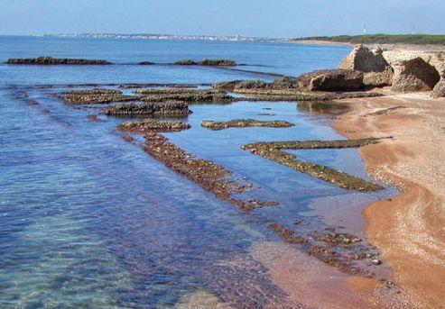 Abemvs incena lampreas y morenas for Vivero para peces