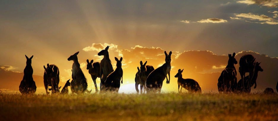 How to travel and work abroad in Asia - Australia, New Zealand