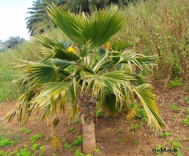 Palmeras cuidar de tus plantas es - Plantas de interior palmeras ...