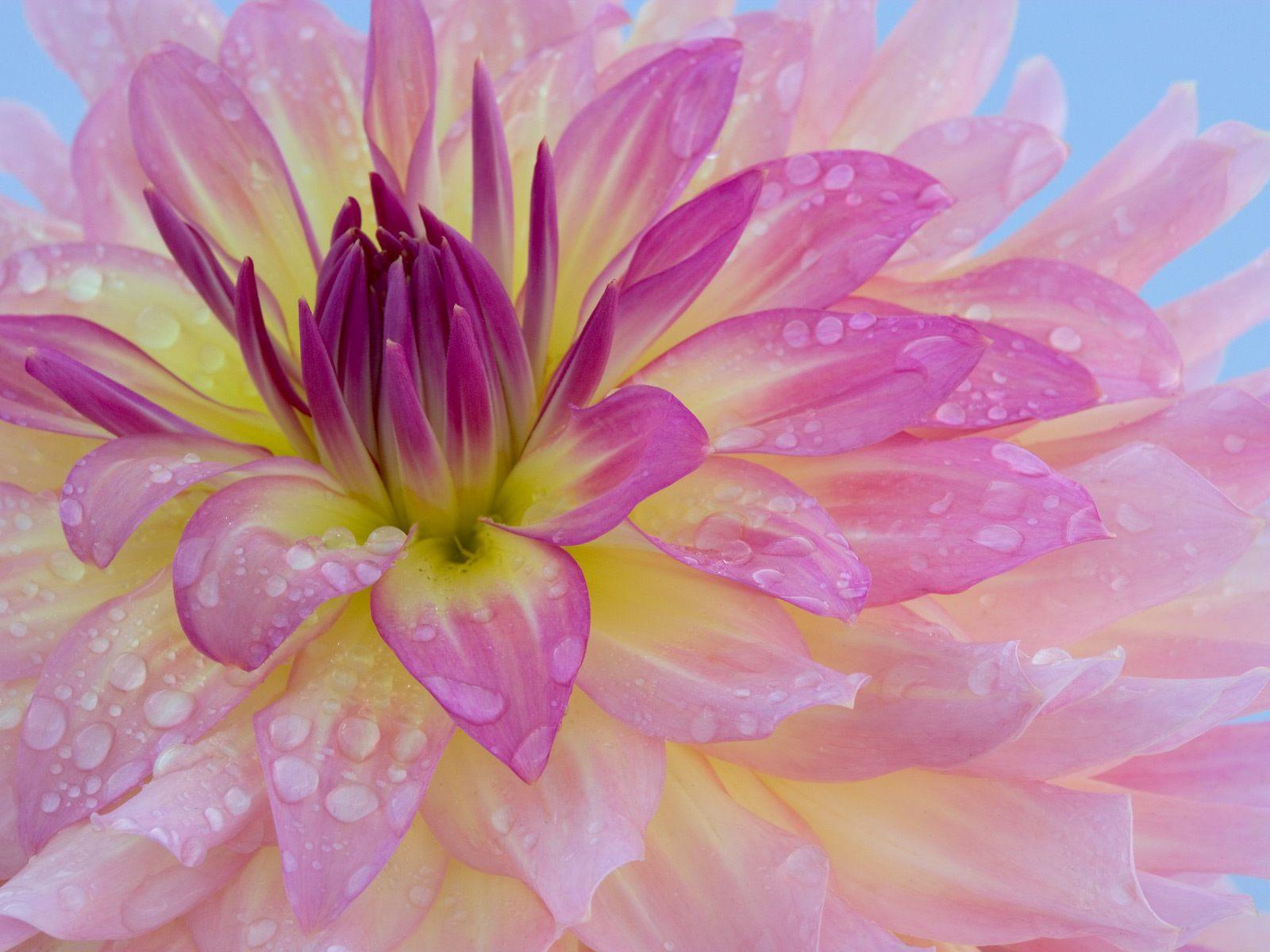 http://3.bp.blogspot.com/-xjs2GZ0BgTc/TxvcfJPLEOI/AAAAAAAADVQ/LlPz2feXQXI/s1600/lily+flowers+wallpaper.jpg