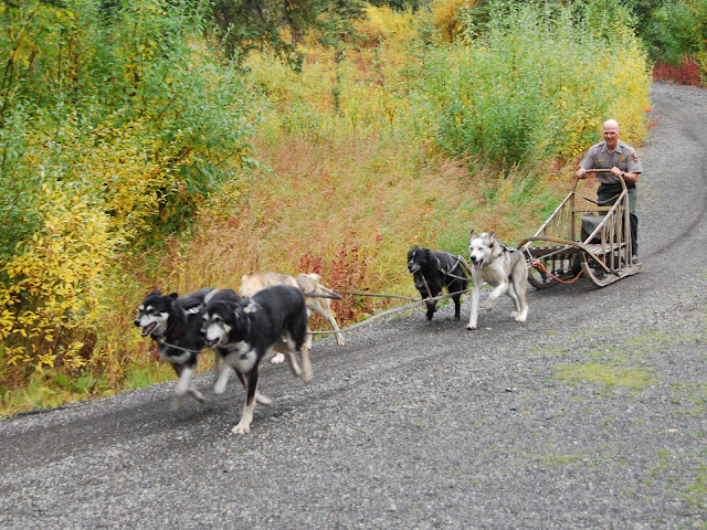 Sled dog demo # Denali