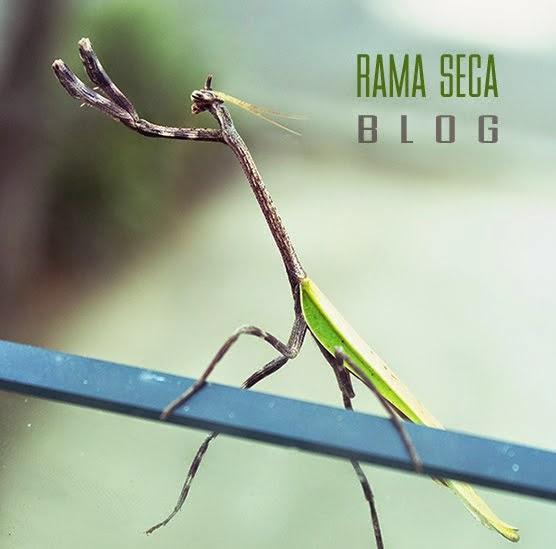 Rama Seca