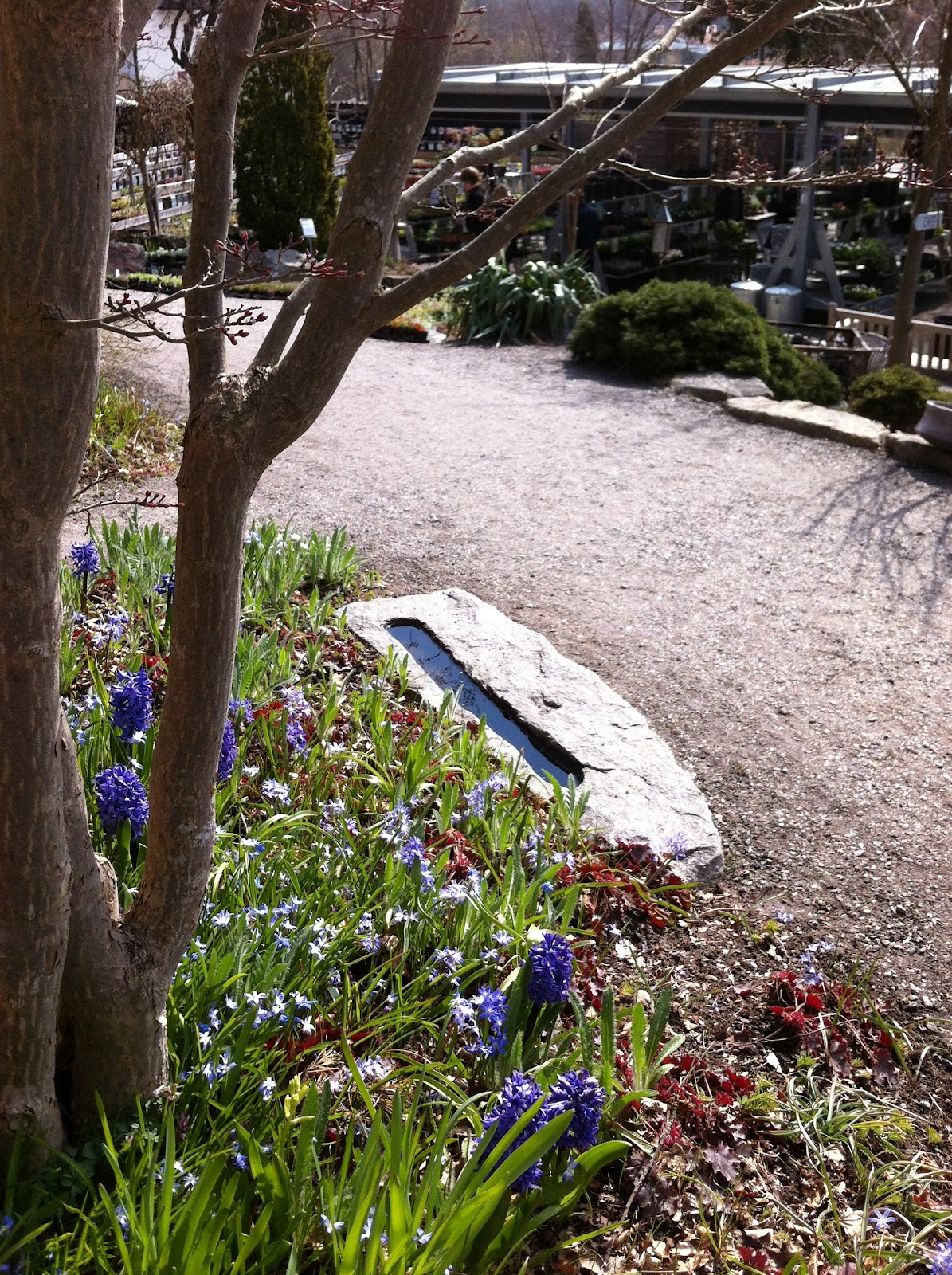 Den passionerade trädgårdsturisten: med iphone på zetas...sol idag.