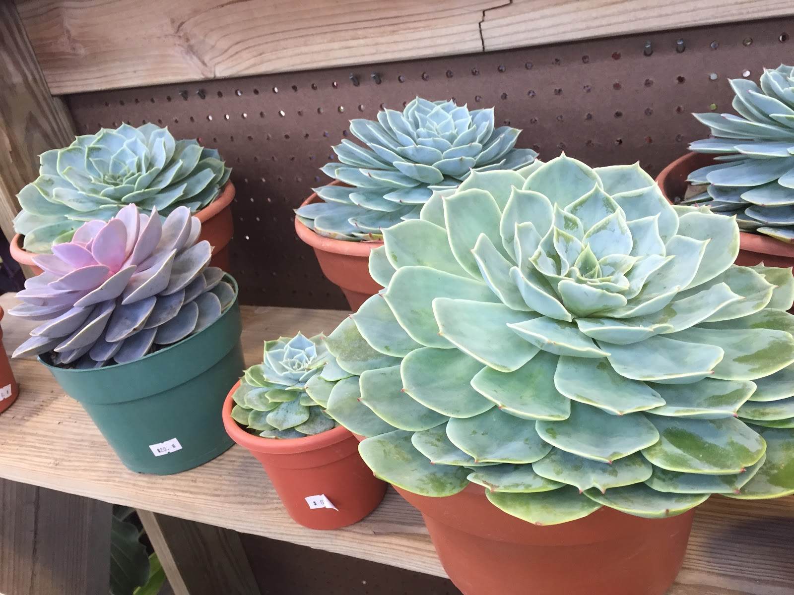 Succulents at the 2015 Indiana Flower and Patio Show Backyard