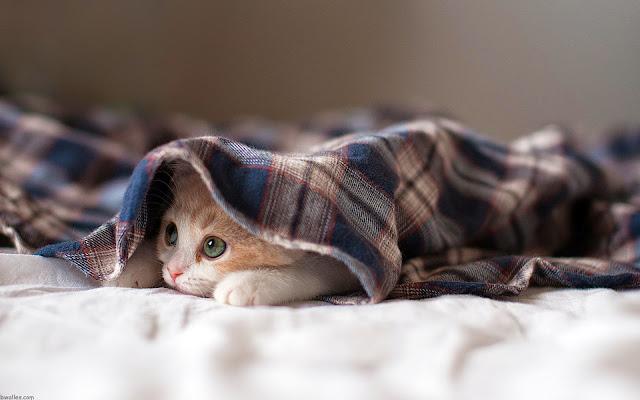 Hình nền mèo đáng yêu và tinh nghịch