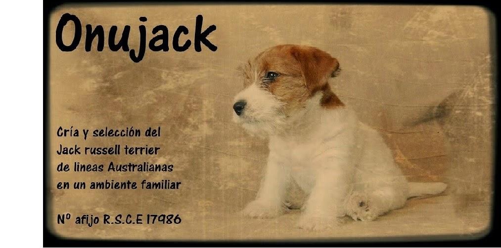 Criador Jack Russell Terrier en España, Onujack