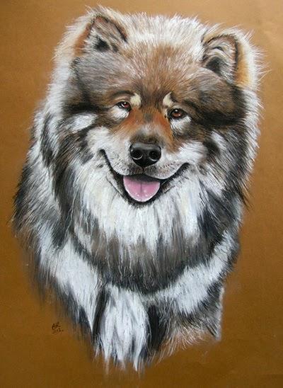 Tierportraits in Farbe