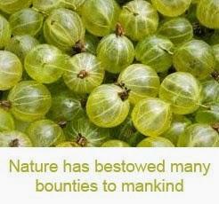 gooseberry health benefits