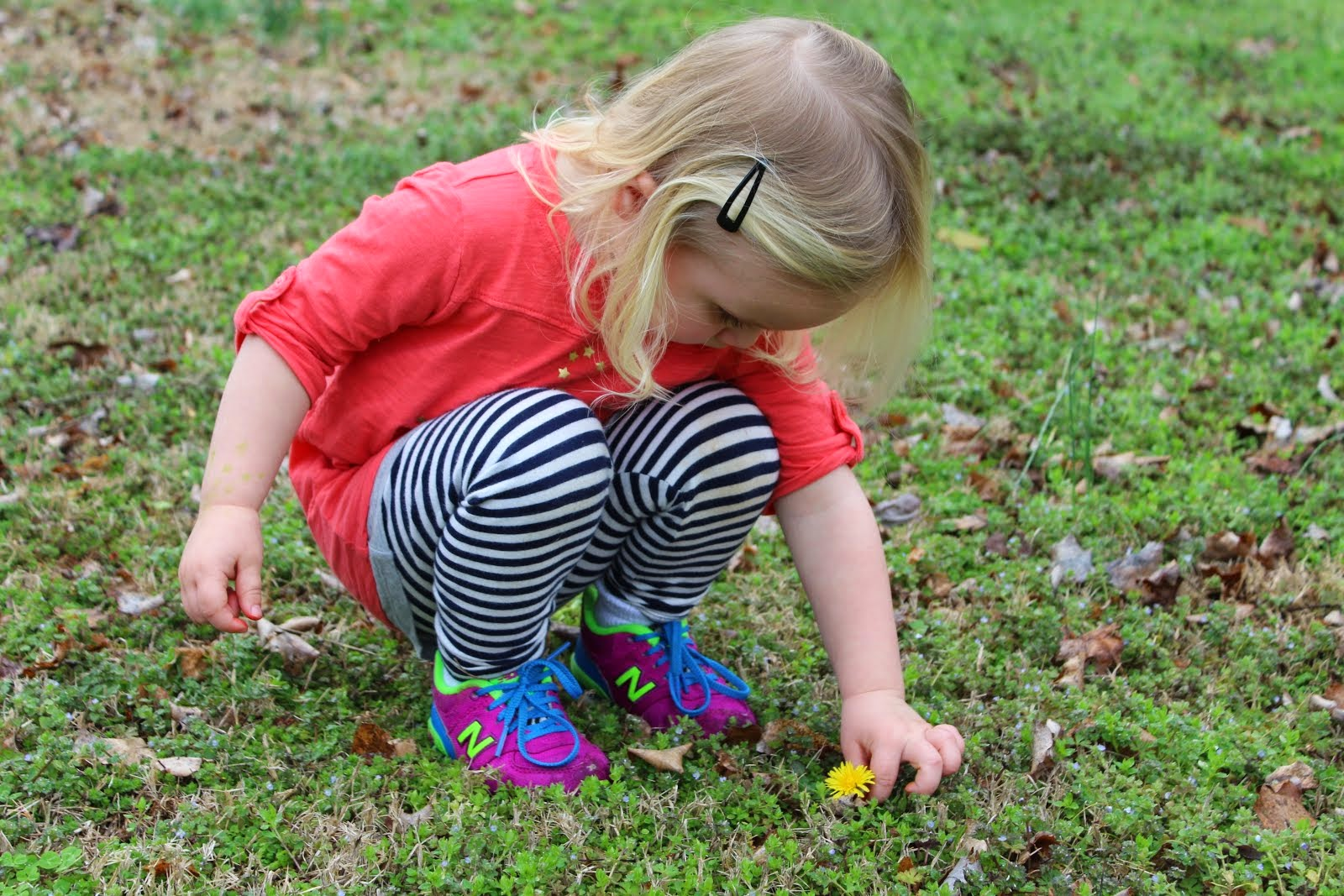 Picking Dandelions!