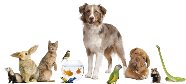 Pets effects on your Zodiac behavior