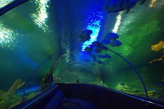 Aquarium Nha Trang (Vietnam)