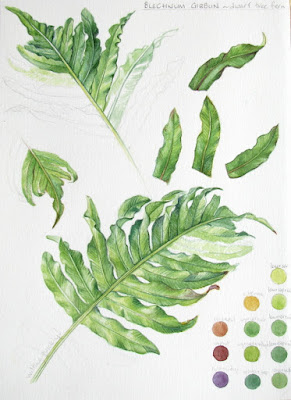 Sketchbook studies in watercolour of green fern leaf by Shevaun Doherty