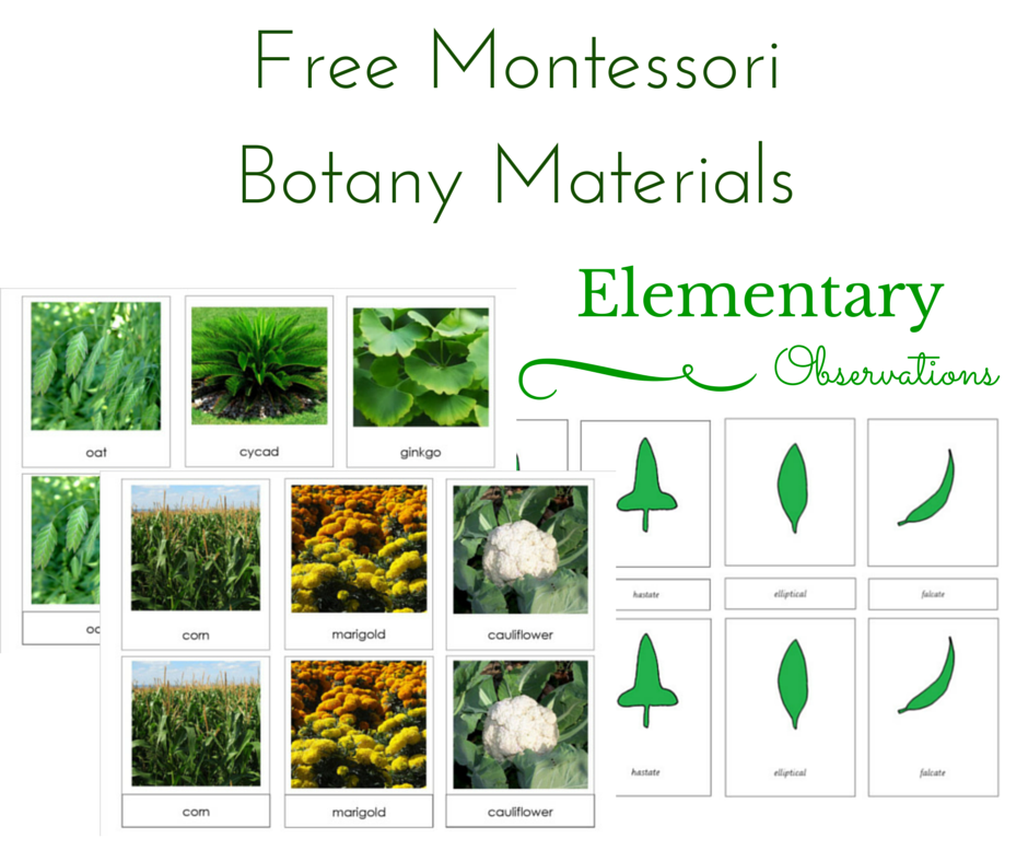 elementary observations free botany materials