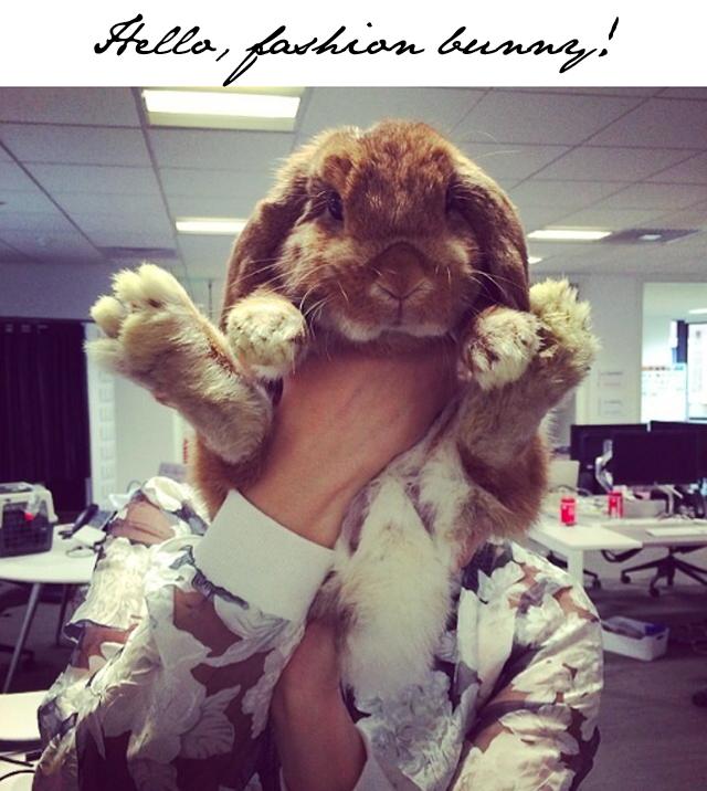 Elle Fashion Bunny