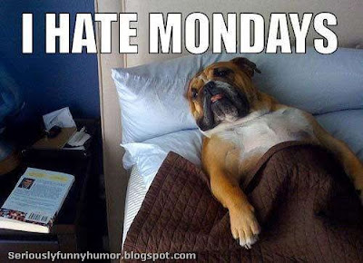 Dog Chillin in bed Hating Mondays! Funny Picture