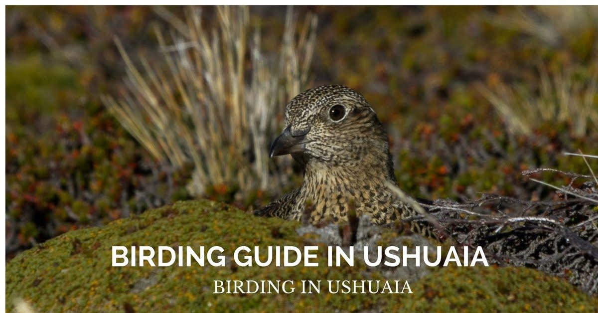 BIRDING GUIDE IN USHUAIA