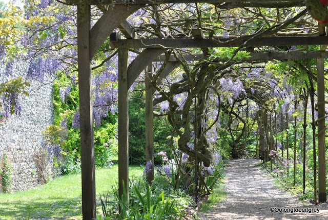 Wisteria, Grey's Court, National Trust,Henley, England.