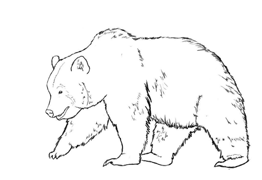 Sitting Bear Drawing Bears Typically Have Very Tiny